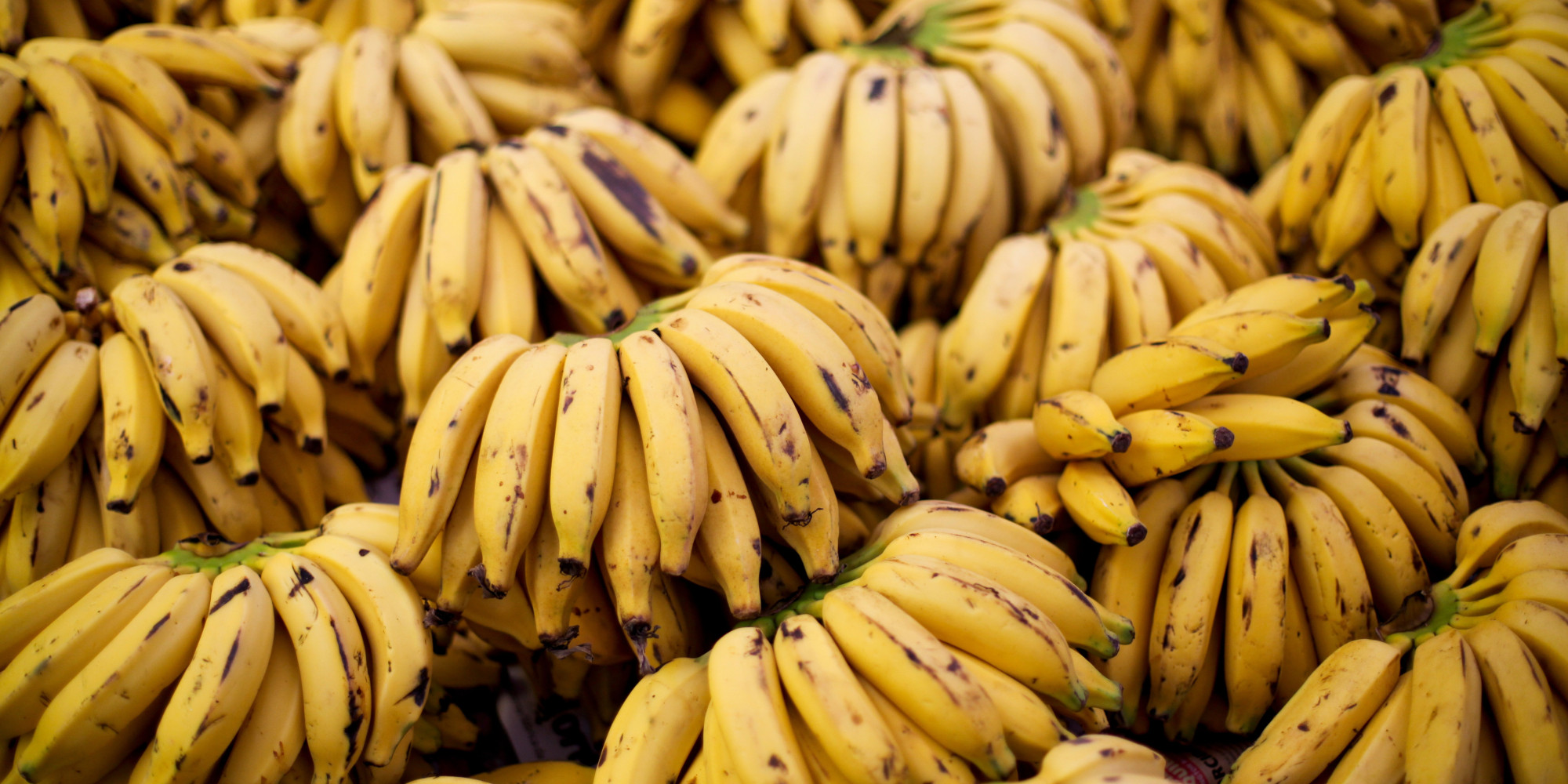 banana fungus insect outbreak threaten global supply huffpost