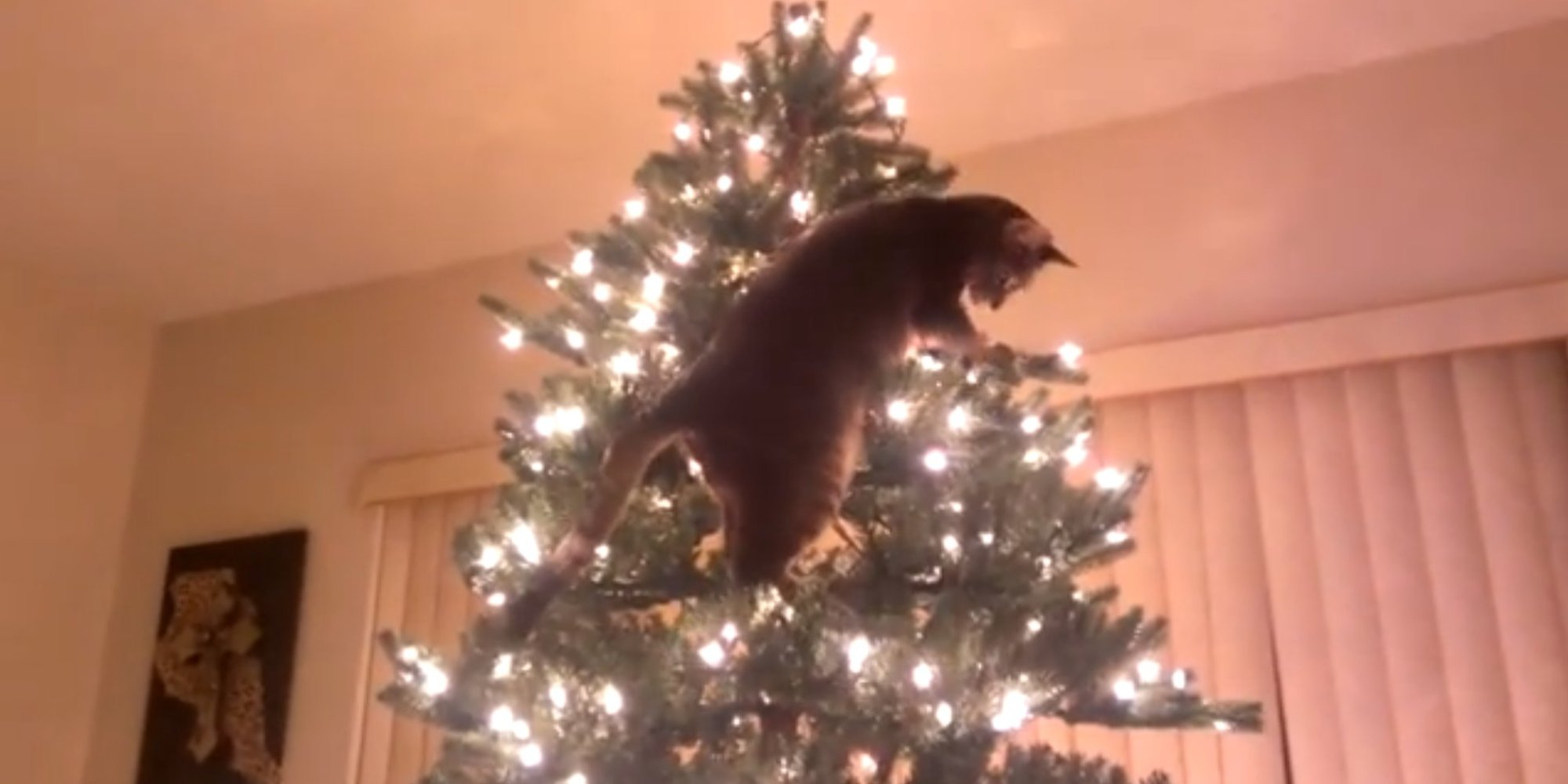 Cat attempts to climb christmas tree video huffpost uk Christmas tree cat tower
