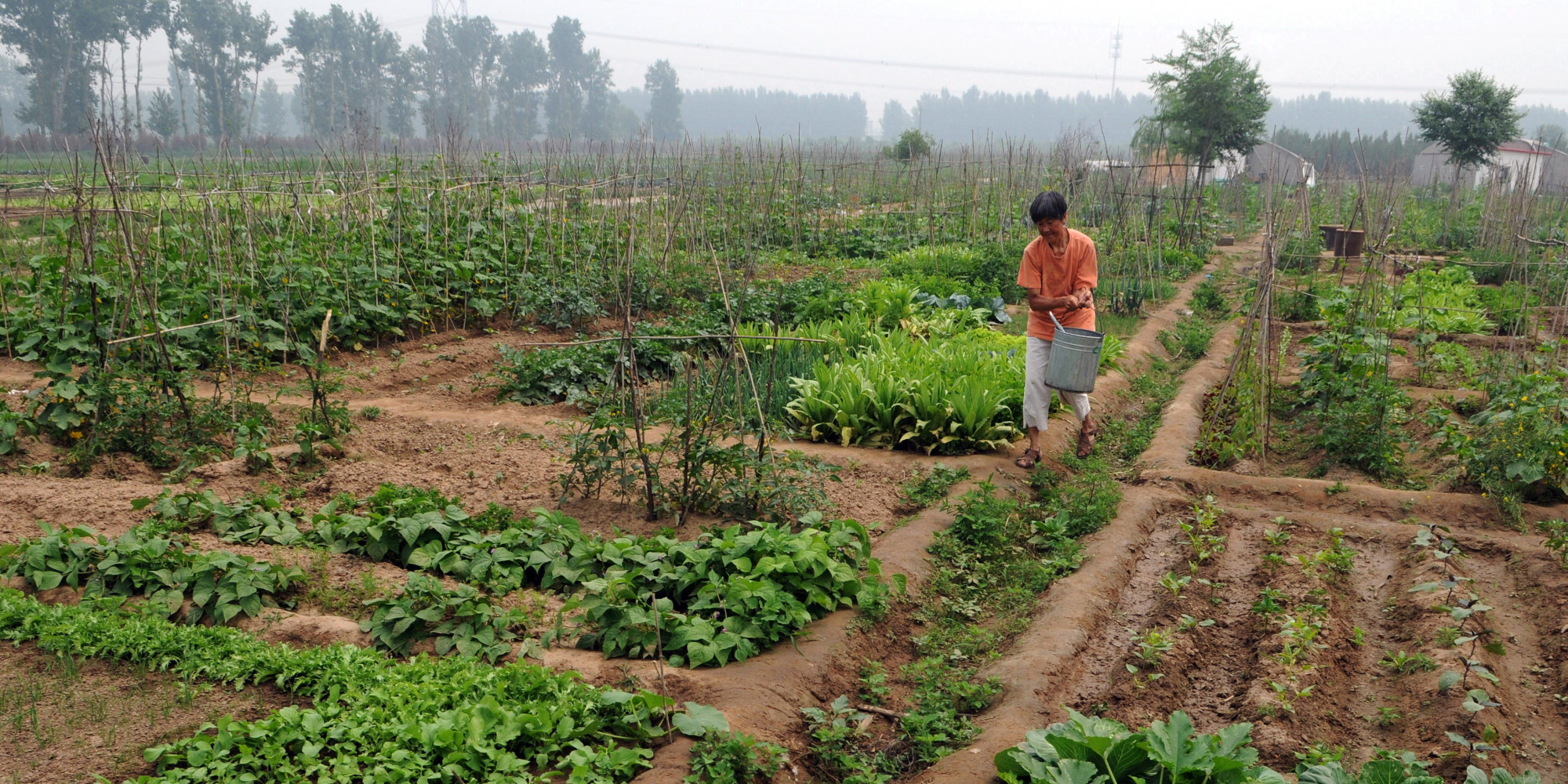 organic farming business proposal Concept of farming and the sector, organic farming in india: in india, the main concept of earning was from farming this is an occupation that has been in demand constantly as without this there could be no survival.