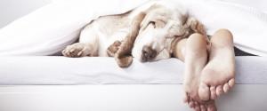 MEN SLEEPING WITH DOG