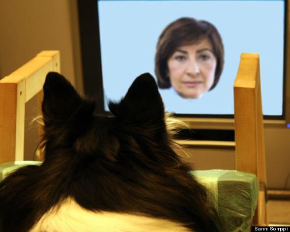 dogs recognize faces