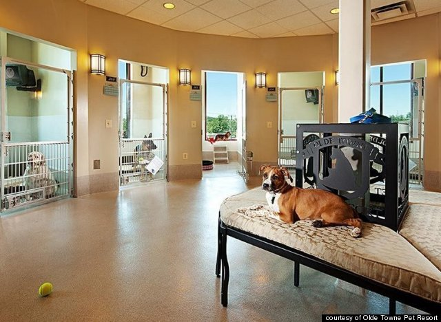The Amazingly Fancy Pet Resort Where Cuddle Dates Are
