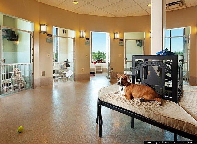 Olde Towne Pet Resort 44 Pos 38 S Boarding