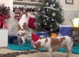 Dogs Ruin Christmas: Maymo & Penny Exact Some Holiday Revenge For All That Dog Shaming