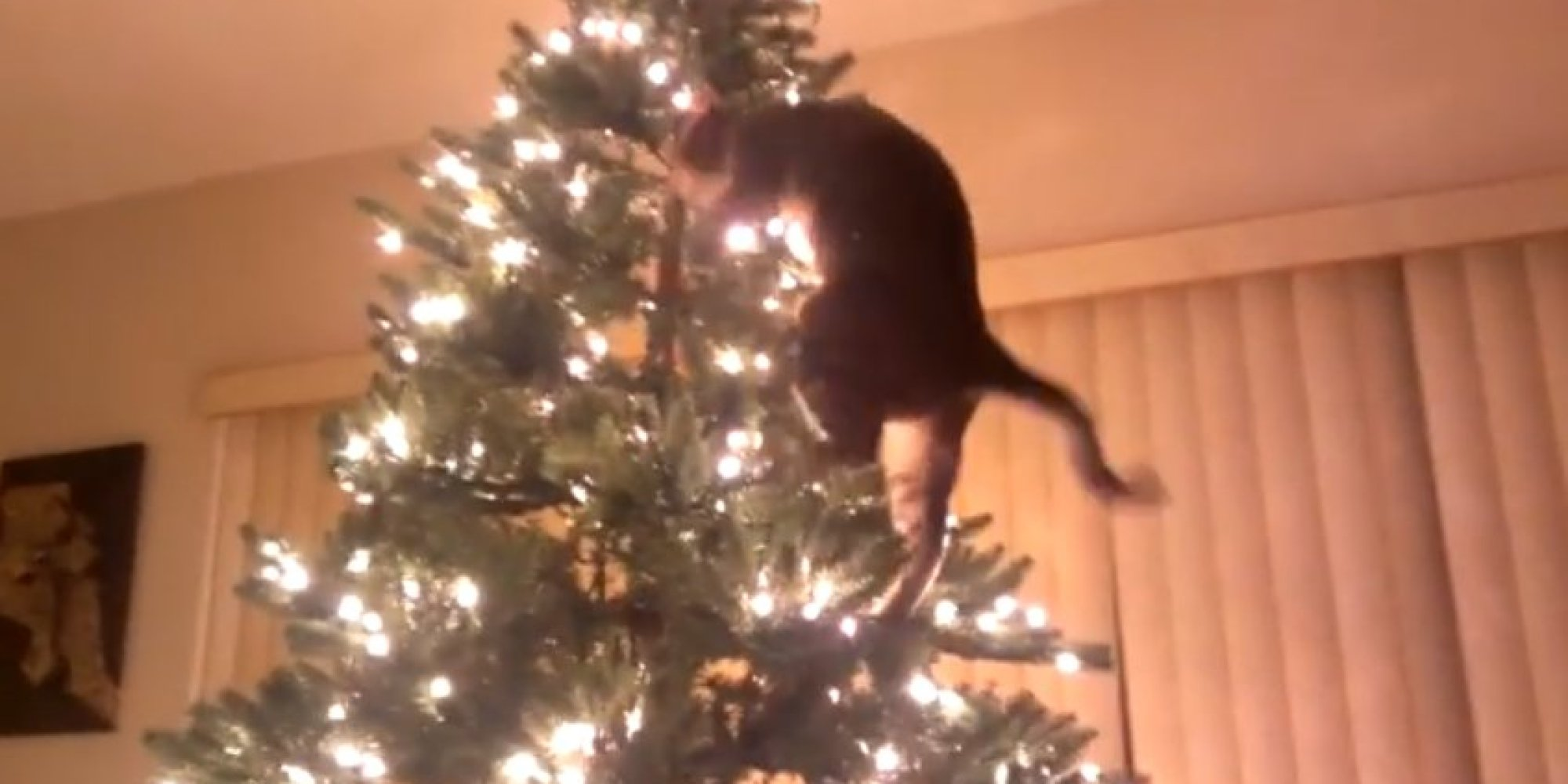 Jerk Cats Return, This Time To Ruin Christmas