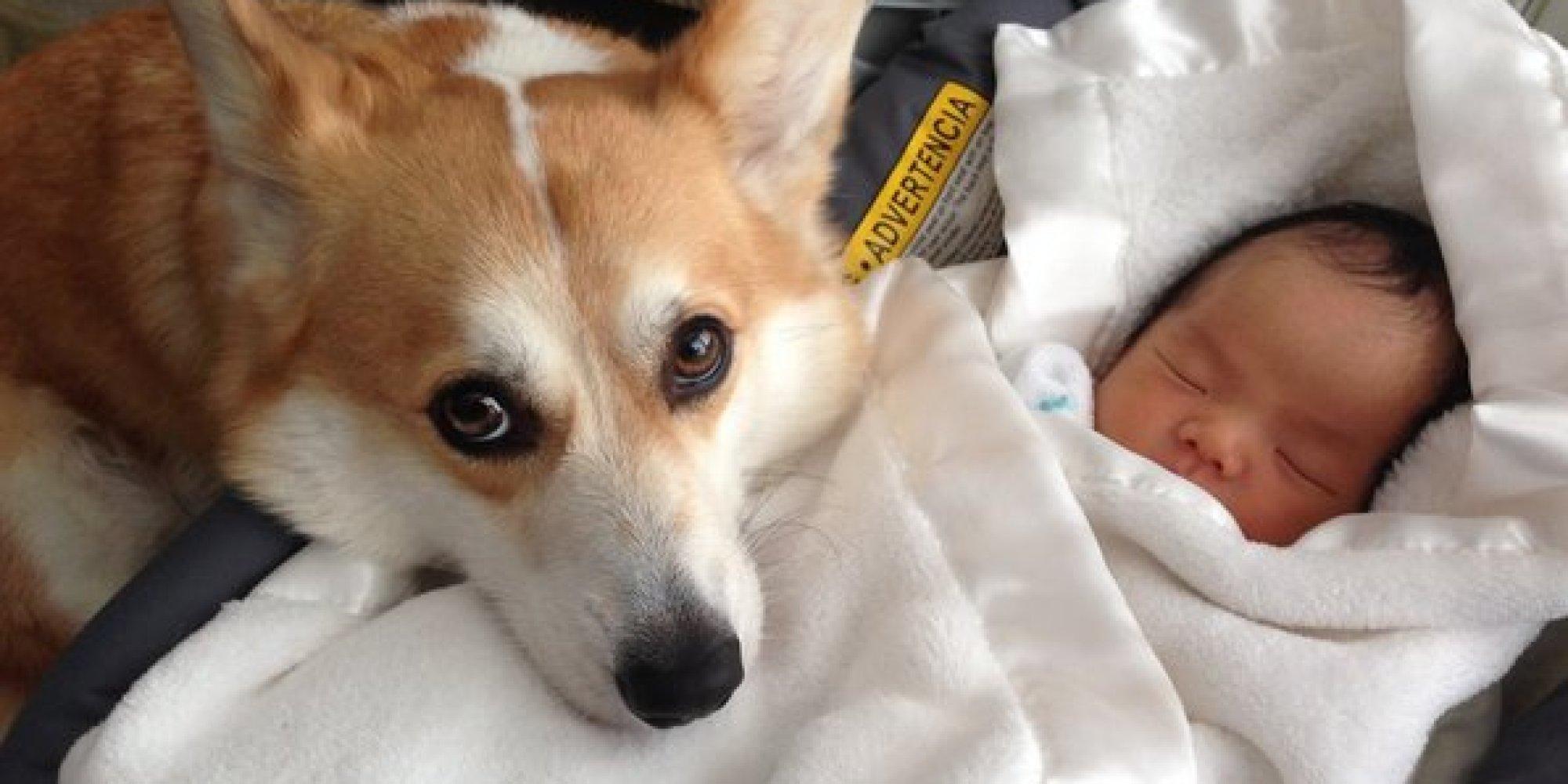Dog And Human Mix Dog and human baby
