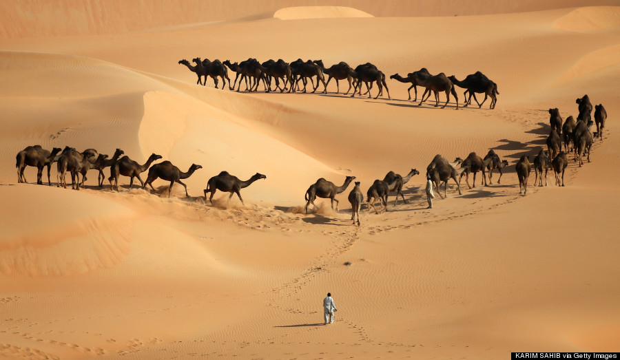 camels liwa