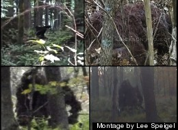 Bigfoot In 2013: A Year Of Pictures, Videos, Controversy And Debate