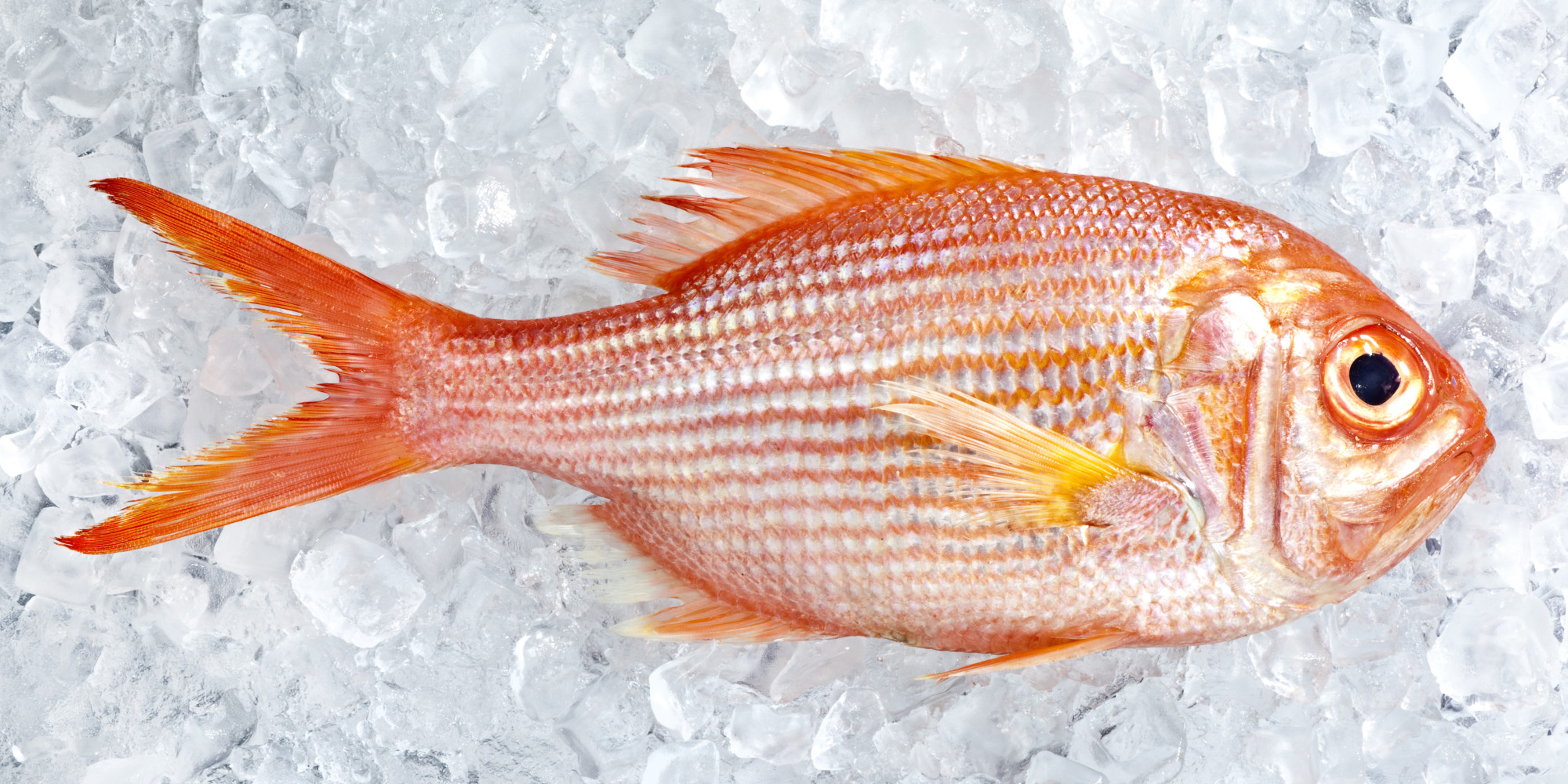 Fish can help boost levels of vitamin d during the dark for Vitamin d fish