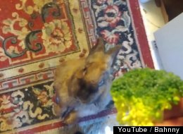 WATCH: This Bunny Has Made An Adorable Leap In Human-Rabbit Communication