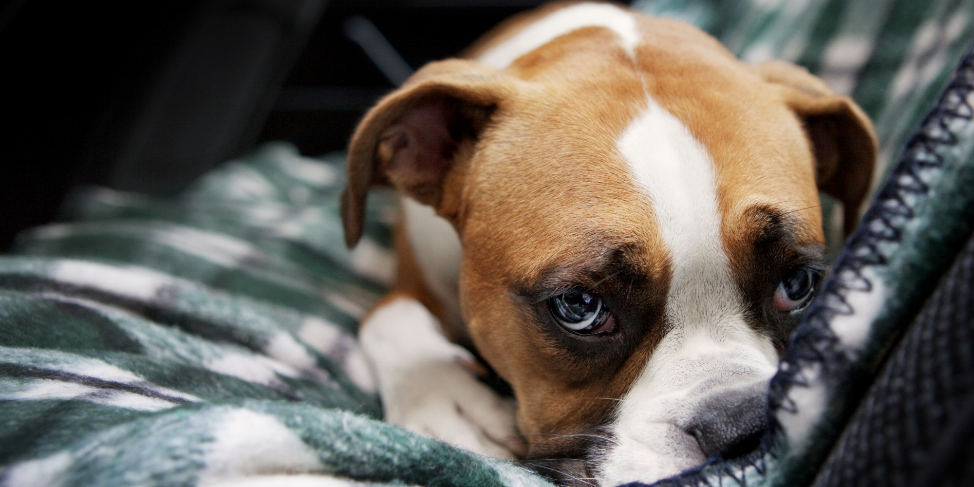 Who Gets The Pets In A Divorce? What You Need To Consider ...  Sad