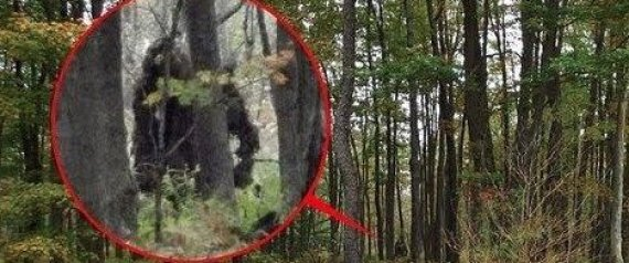 bigfoot scotland pictures
