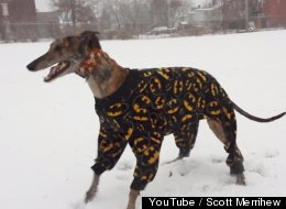 Watch This Greyhound In Batman Jammies Frolicking In The Snow