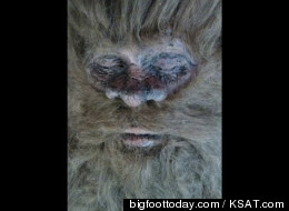 Is Bigfoot Dead? Hunter Claims He Killed The Hairy Beast
