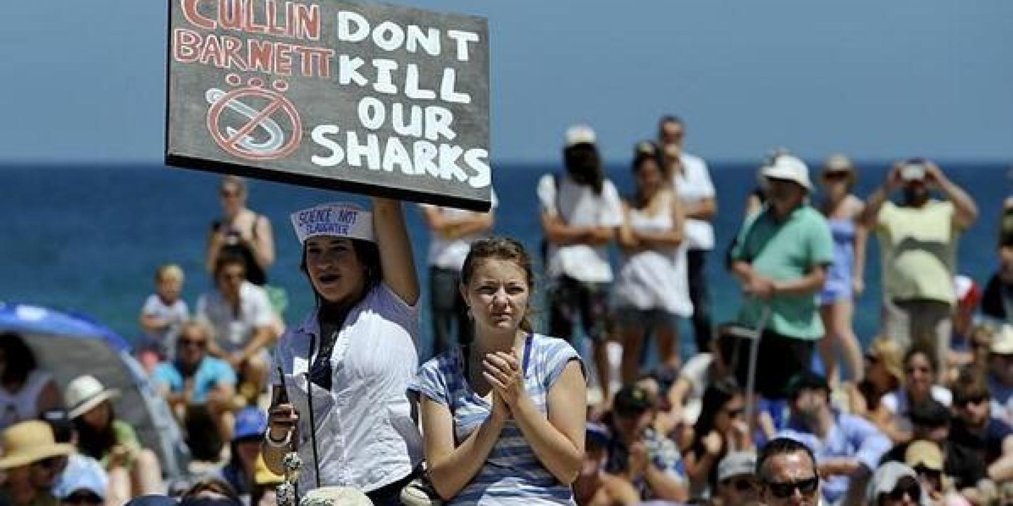 Western Australia Shark Cull Shark Cull in Western