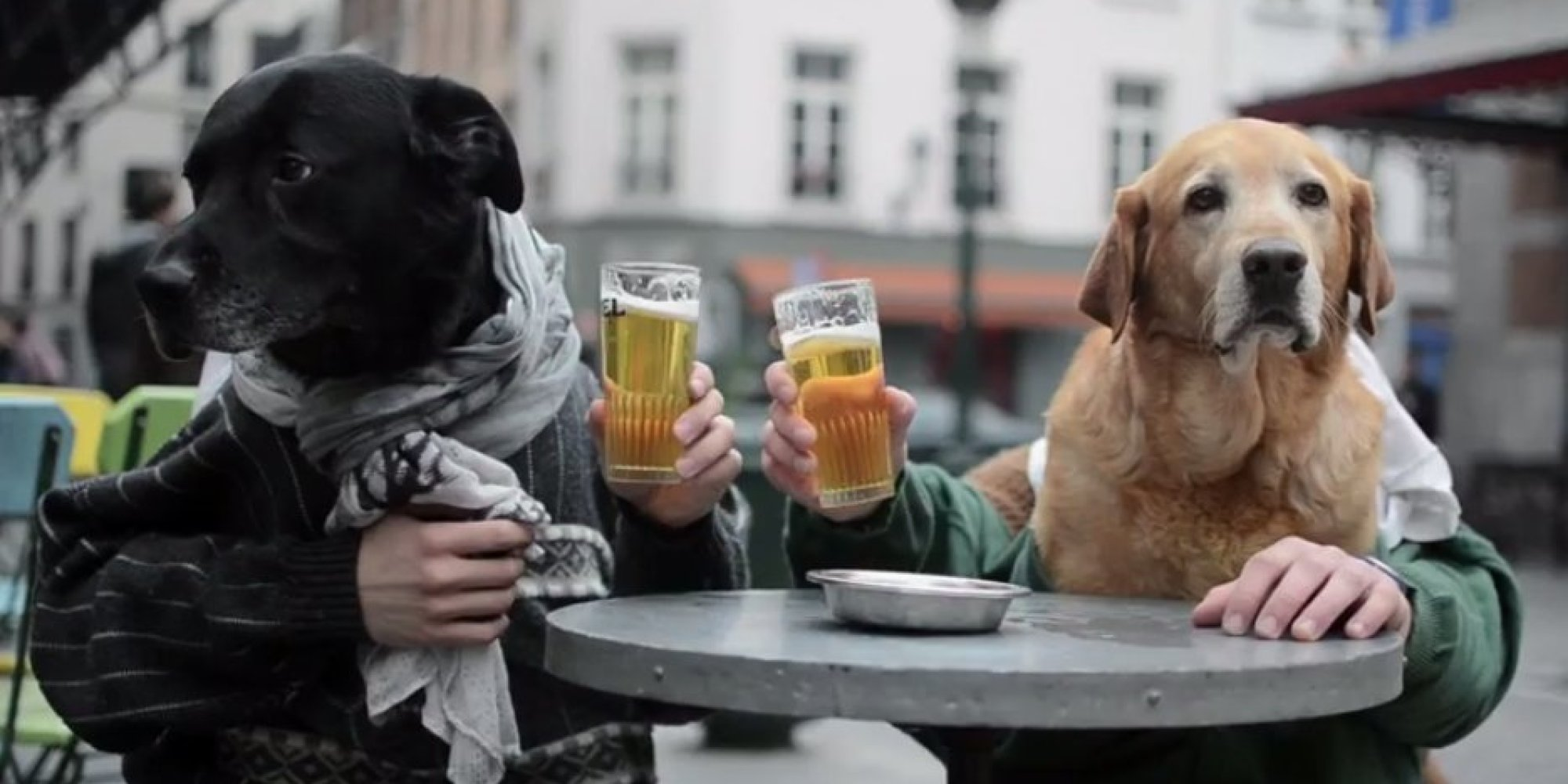 Dog with human hands - photo#6
