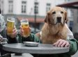 The Best Dogs-With-Human-Hands Music Video You'll See Today