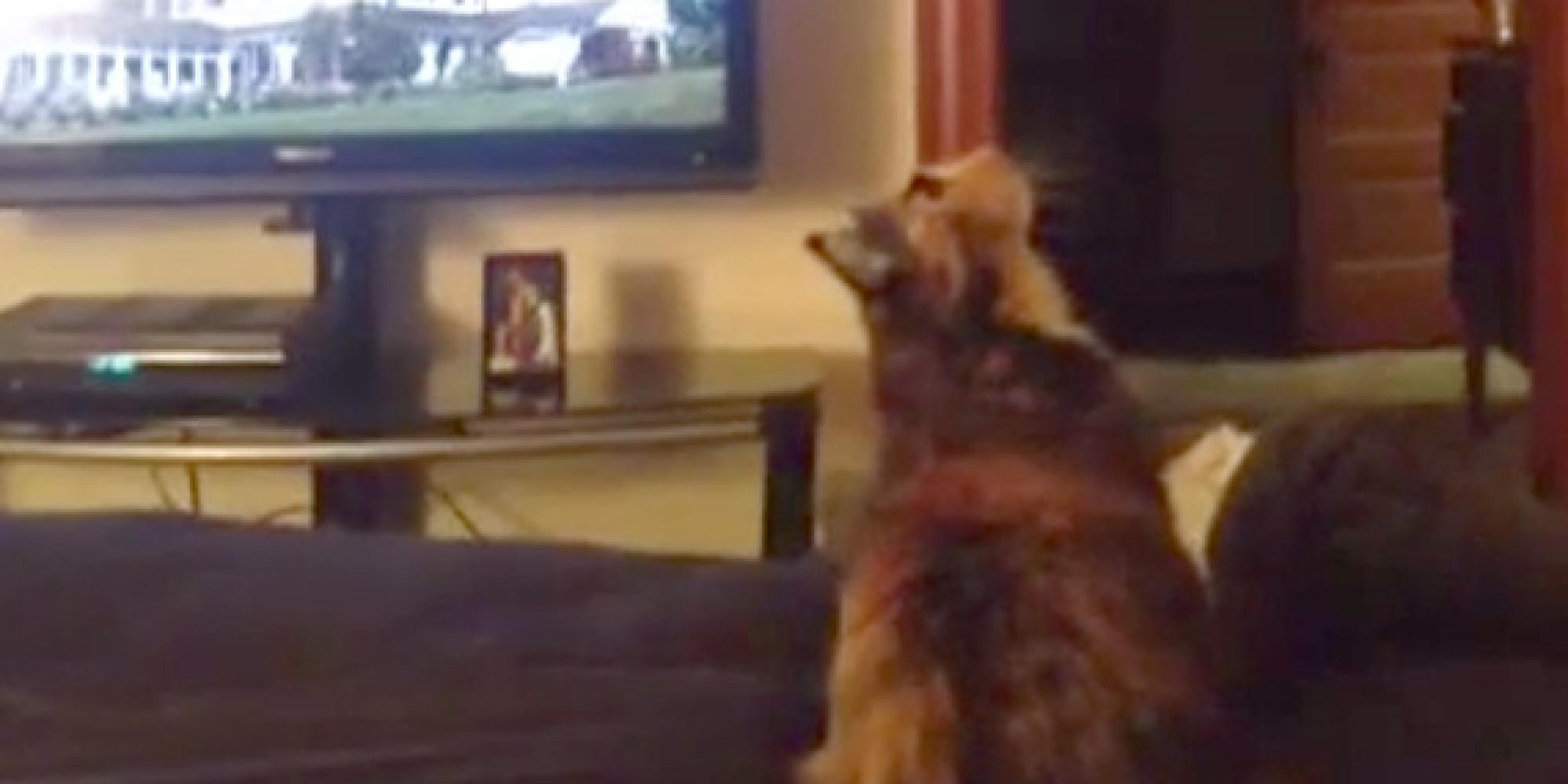 cat jumping backwards fail succinctly sums up monday