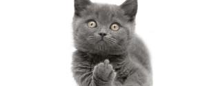 Kittyfinger