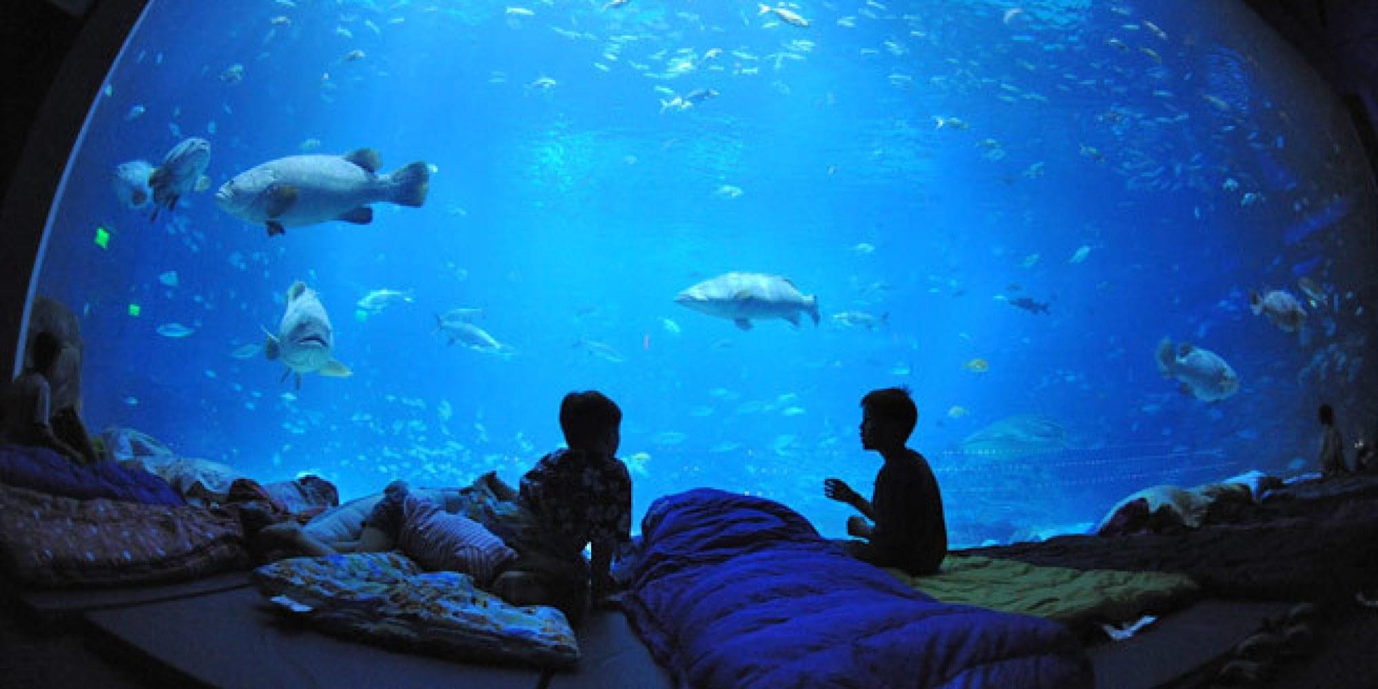 World S Coolest Underwater Lodgings Fodor S