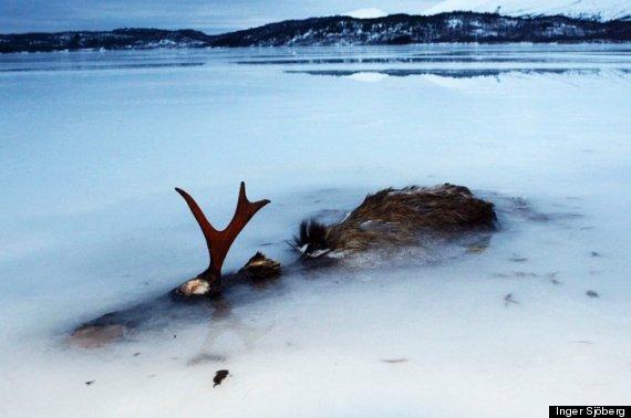 elk frozen