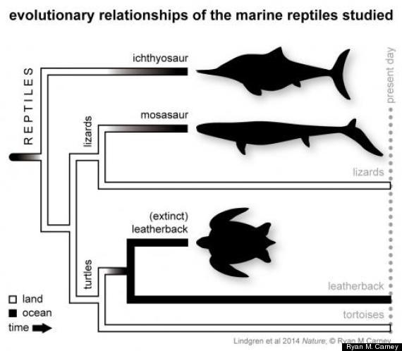 evolutionary relationships