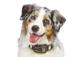 fitness tracker for dogs