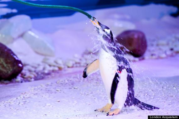 london acquarium