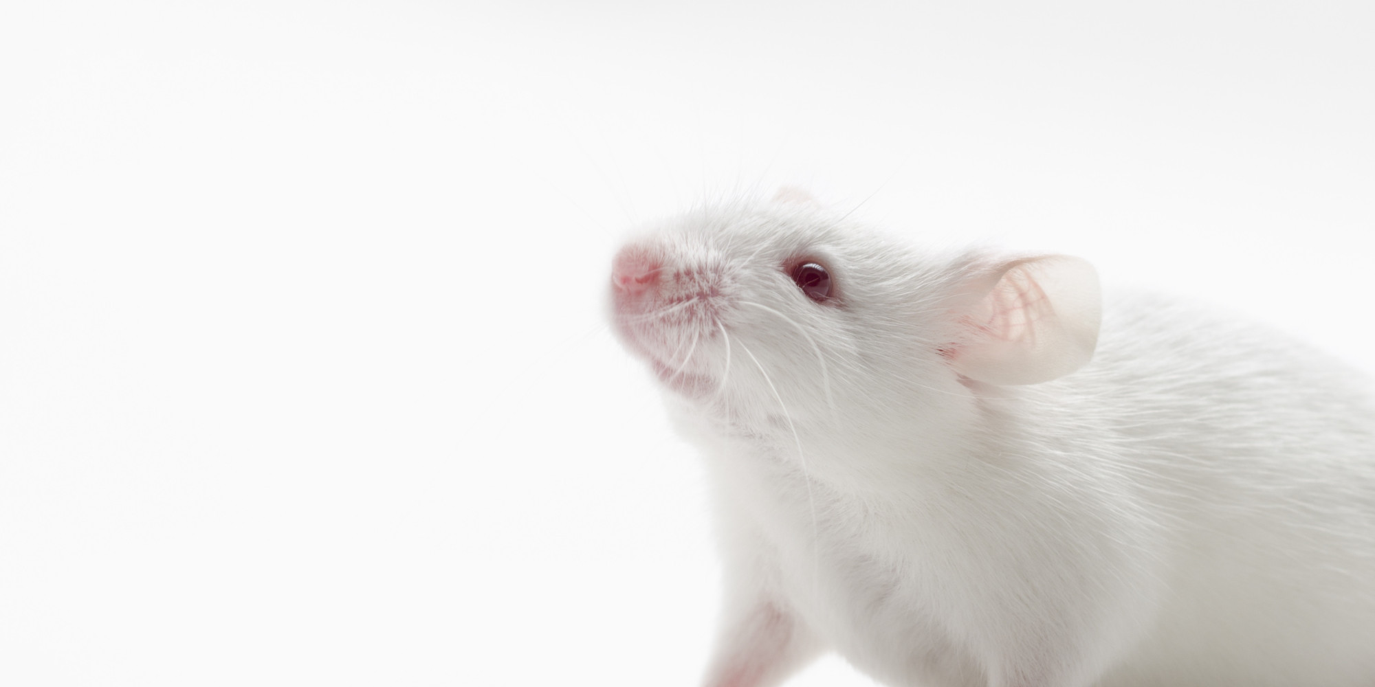 Who Are the Animals in Animal Experiments? | HuffPost