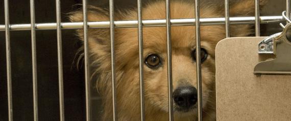 Ny State Dog Breeding Laws