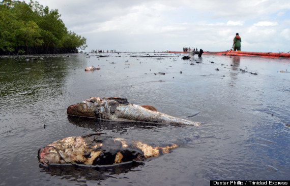 A series of oil spills sully Caribbean paradise, coating mangroves and wildlife (photos)