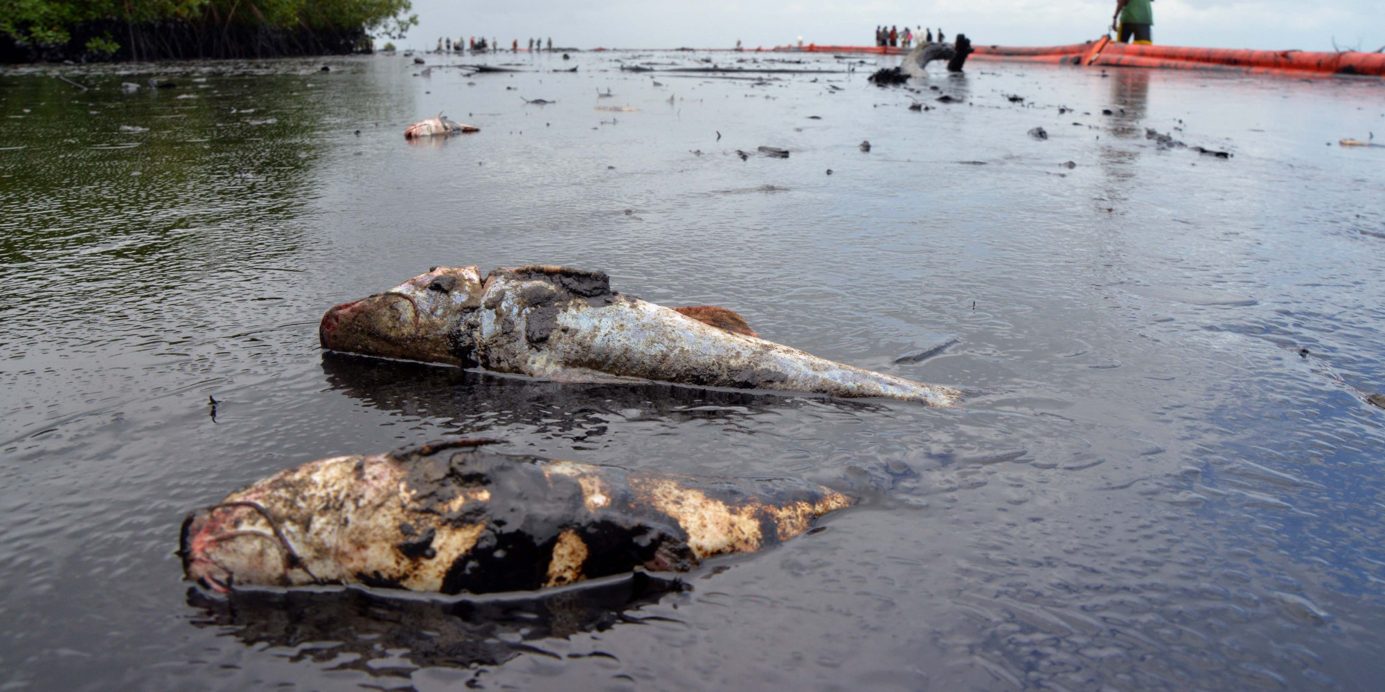 oil spills and their impact on Oil spills can pollute the environment and have a devastating impact on impact of oil spills and a threat to their habitats environmental impact of oil.