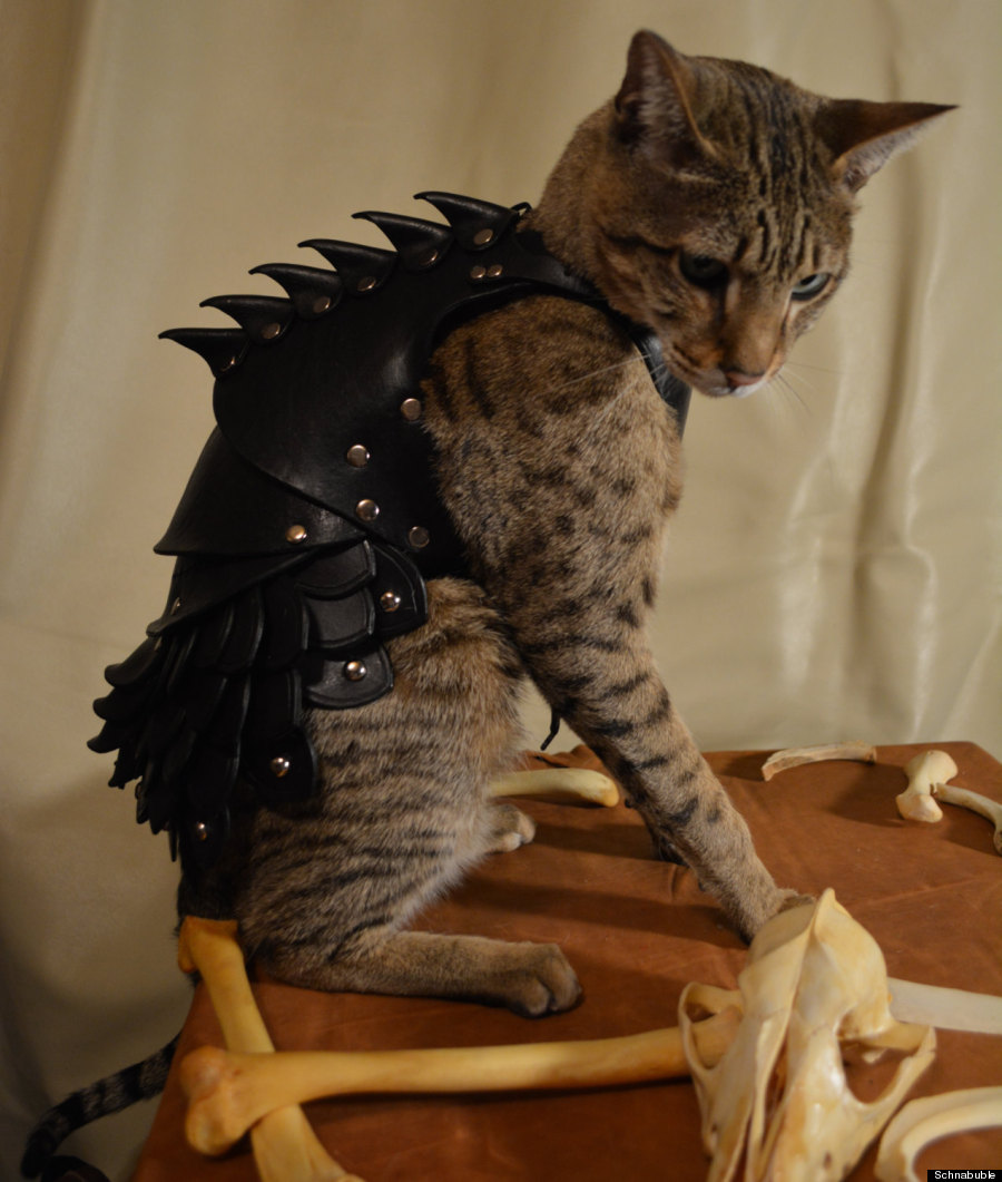 Cat Battle Armor Is Battle Armor For Your Cat (PHOTOS
