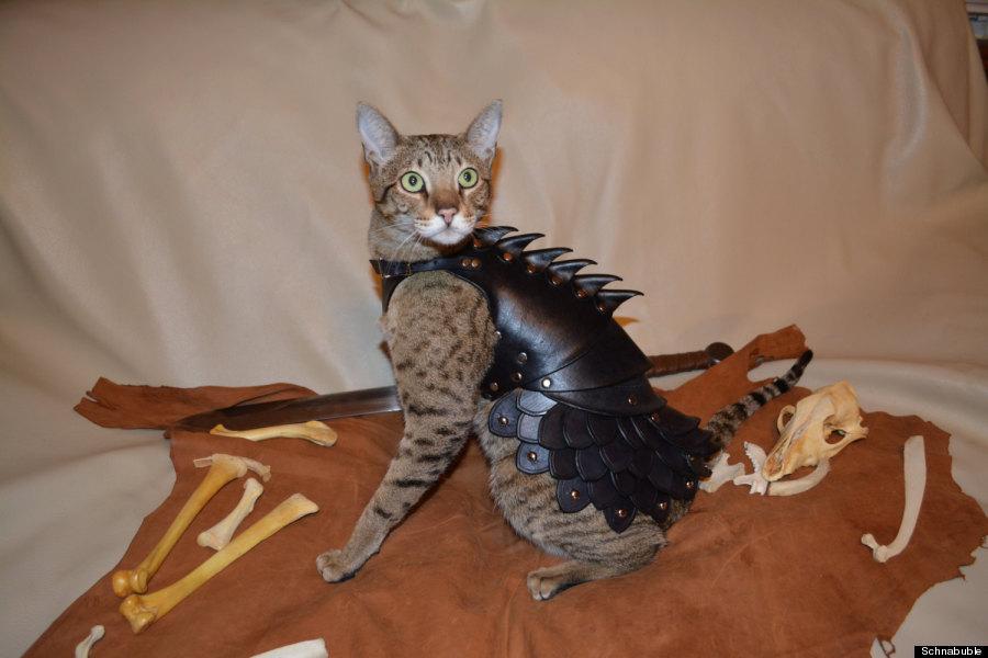 cat body armor