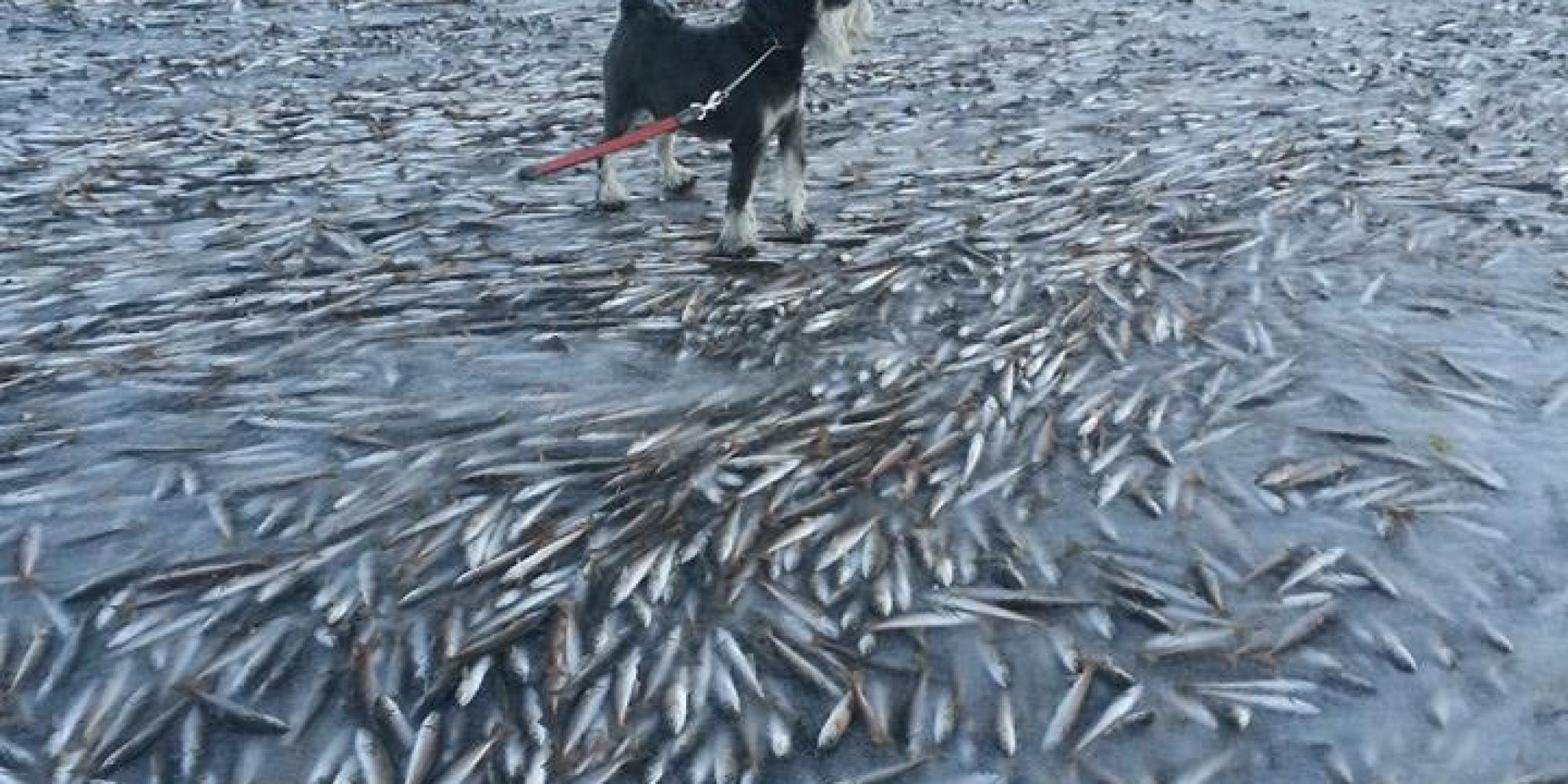 Guys it was so cold in norway last weekend that a school for The fish place