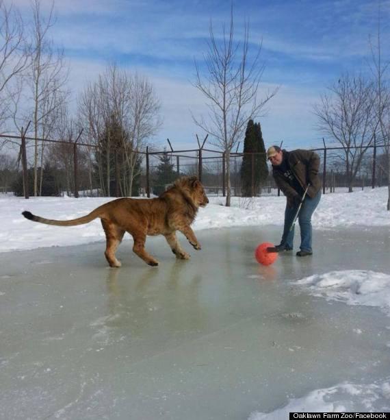lion hockey canada