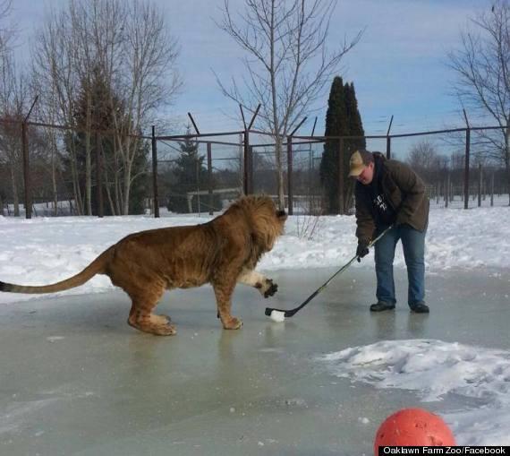 lion hockey canada 2