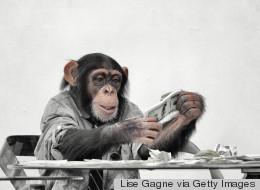 Facebook Is 'Like' My Pet Monkey
