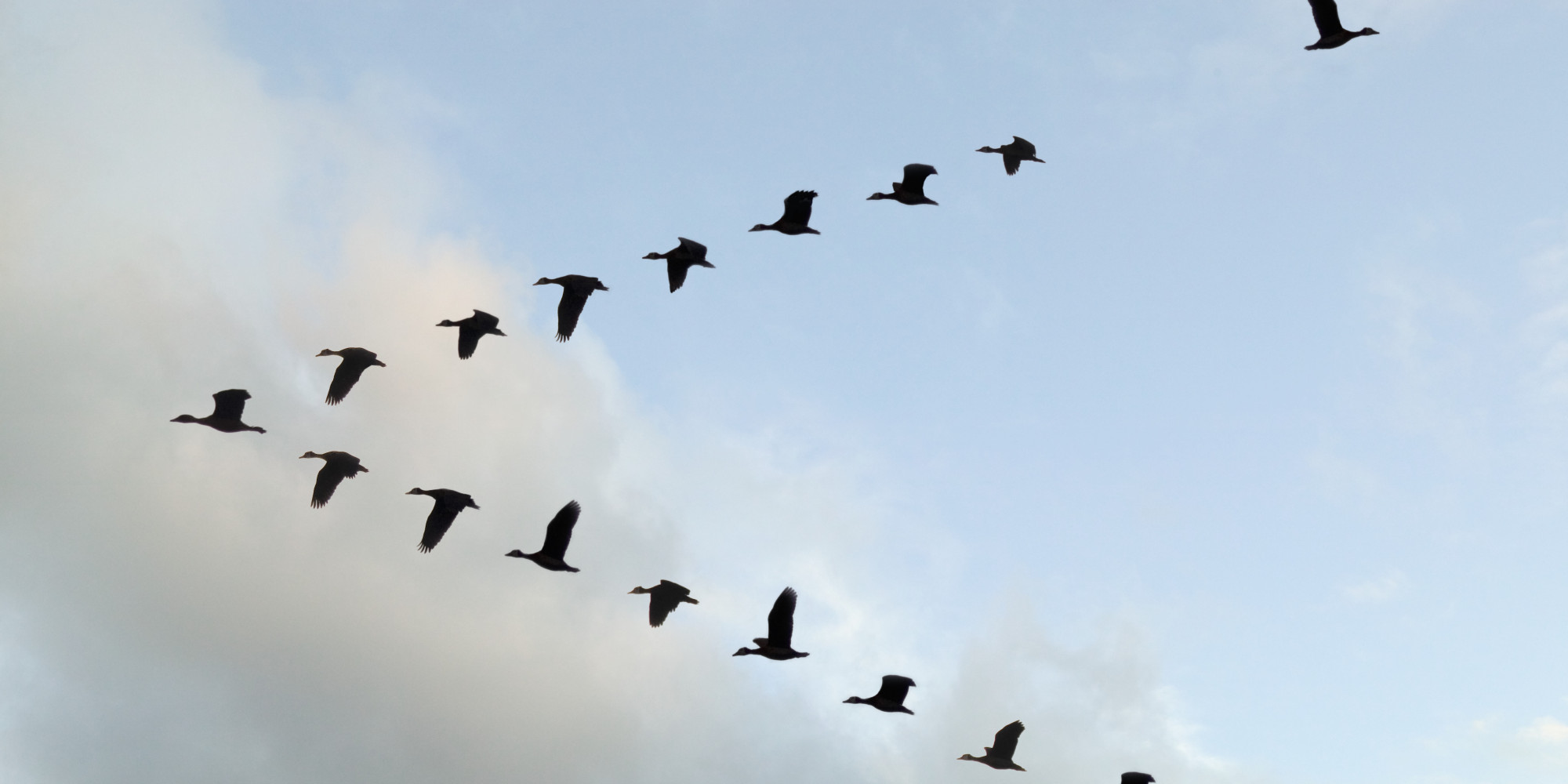 Why Birds Fly In V Formation N 4609100