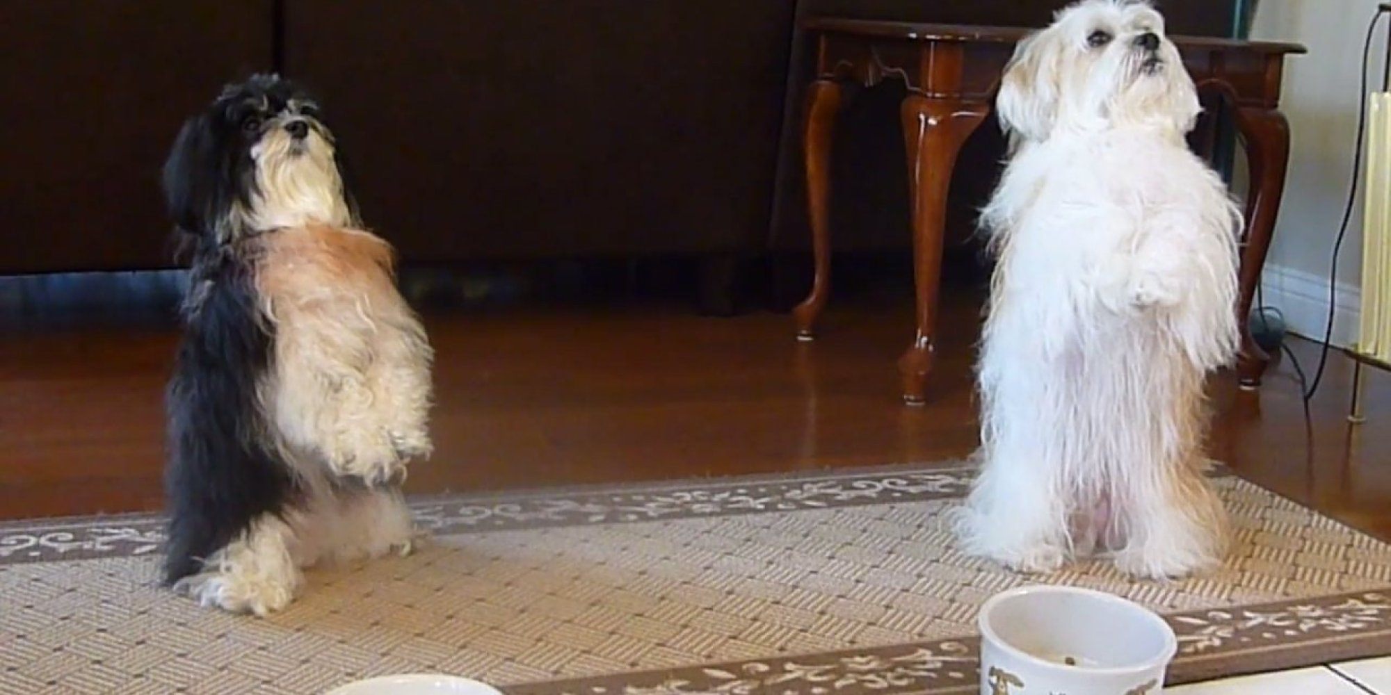 These pups praying before their meal are doggone adorable video