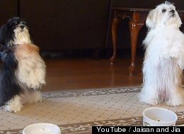 WATCH: These 'Praying' Pups Are Doggone Adorable