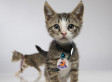 First Annual 'Kitten Bowl' Promises To Be Cute, Adorable (VIDEO)