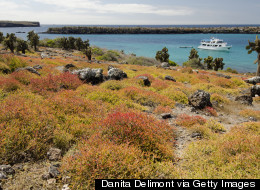 5 Things Not to Miss in The Galapagos Islands