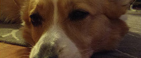 MILLENIAL DOG