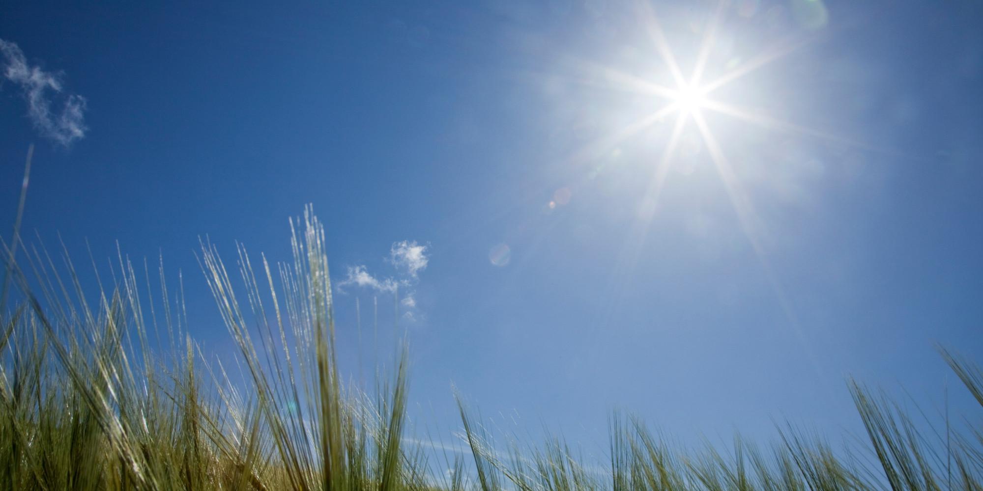 Sunshine Net Worth