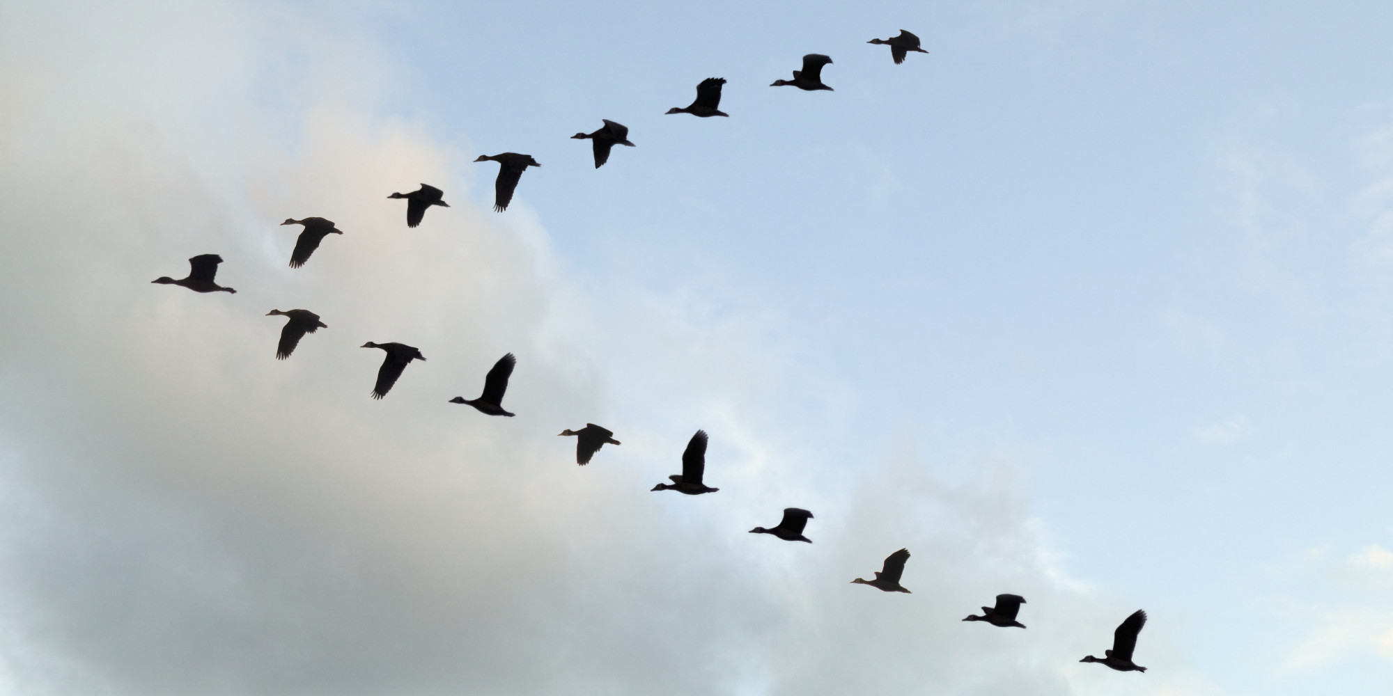The Amazing Reason Why Birds Fly In A V Formation