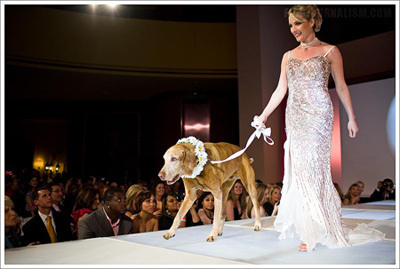 Dana Perino Hits the Runway