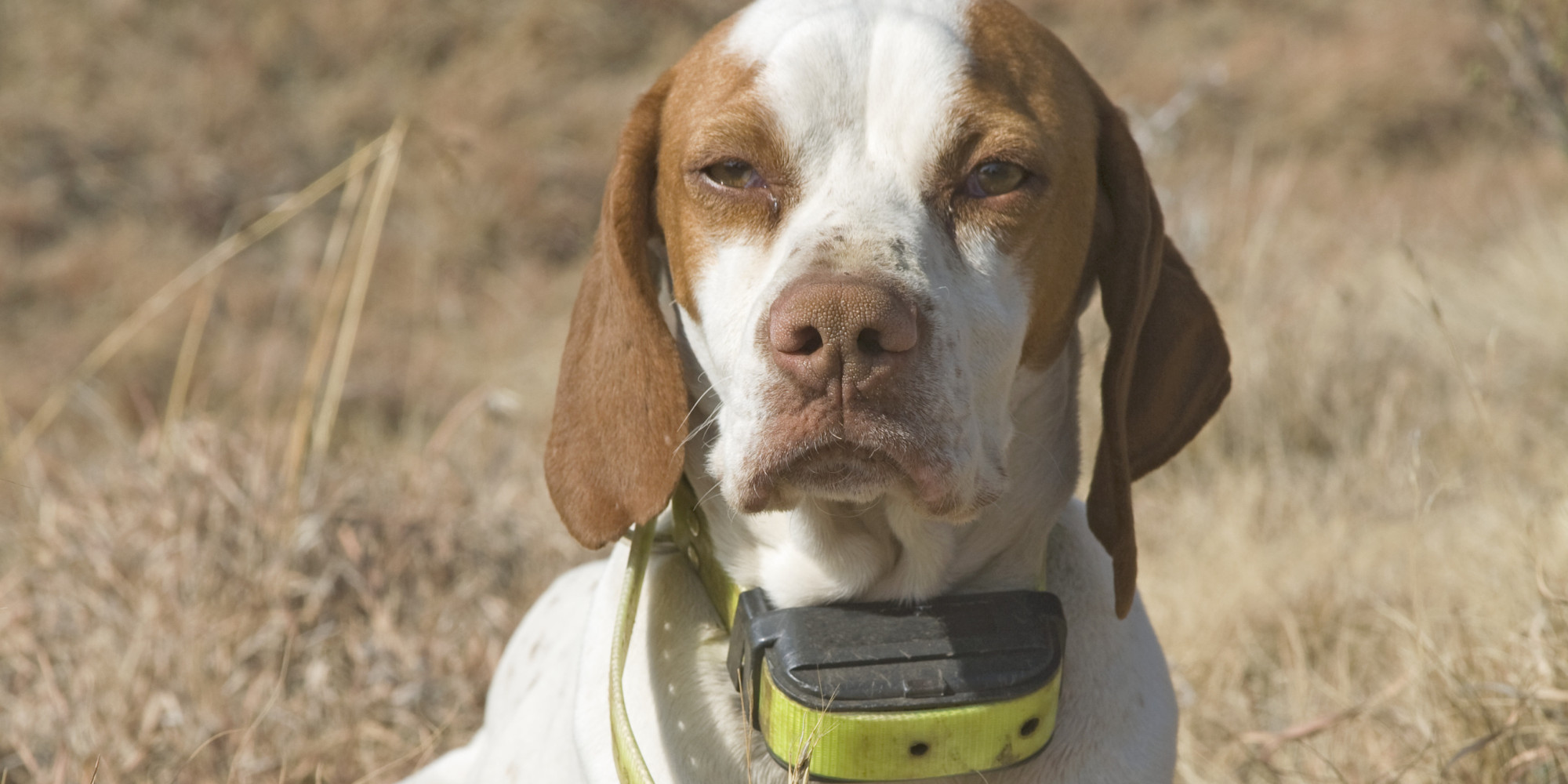Shock Collar Dogs Canada