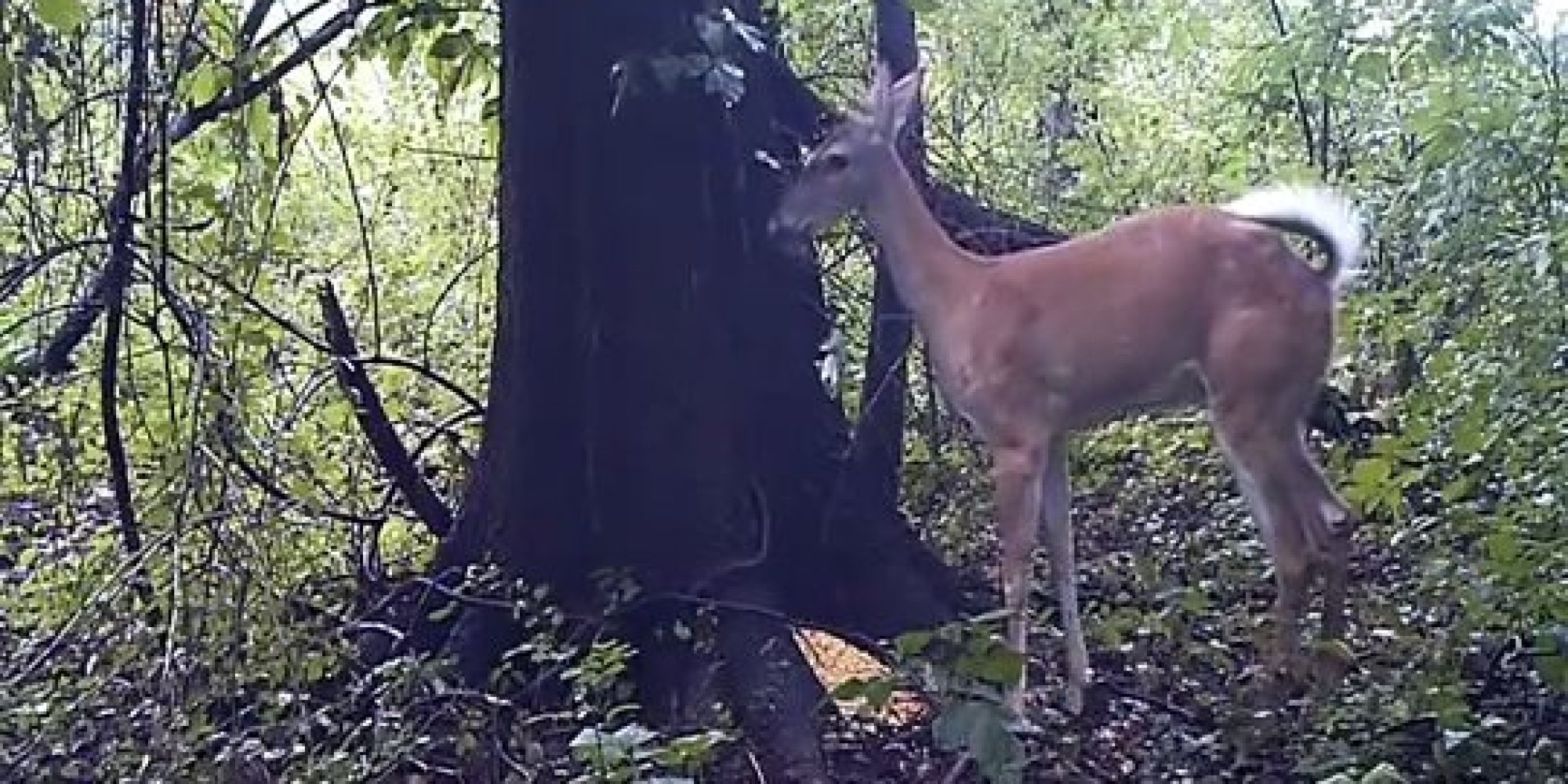 This Deer Thought No One Was Watching It Fart Now The