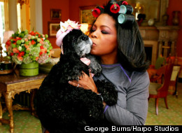 The Huge Impact This Little Dog Had On Oprah's Life